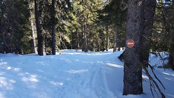 Scheinberg, Schneeschuhwandern im Winter, Pfeilmarkierung.