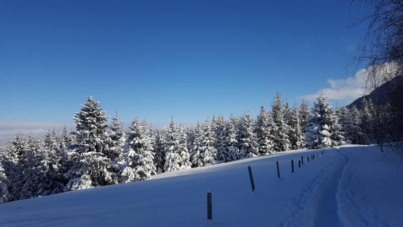 Winterwandern zur Buronhütte und Haslacher Alpe, Foto 5