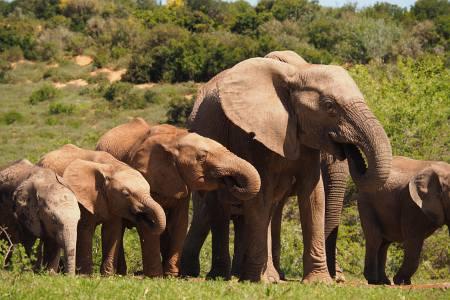 Südafrikareise 2014, Foto 12, Elefantenfamilie
