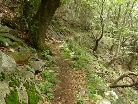 MTB Trail Tracciolino, Bild 15