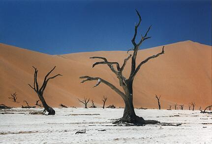 Foto Namibia, Dead Vlei
